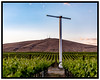 In the Vineyard (sibnet2000) Tags: vineyard grapes bentoncitywa agriculture spring sunset canon5dmarkiv