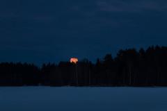 Evil eye / Paha silmä (Olli Tasso) Tags: moon orange kuu hohto shining oranssi sininen sininenhetki bluehour blue forest island saari metsä jää järvenjää ice lake järvi frozen jäätynyt talvi lumi snow winter cold kylmä freezing jäätävä maisema landscape scenery talvimaisema outdoors hiking nature luonto luontokuva luontokuvaus naturephotography