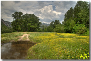 yellow meadow ... HDR