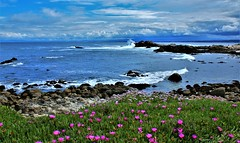 Cloudy Day Monterey Bay (Michael T. Morales) Tags: montereybay pointpinos iceplant