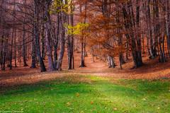 L'autunno avanza (SDB79) Tags: foliage foglie autunno bosco foresta pnalm natura valle fiorita molise pizzone alberi