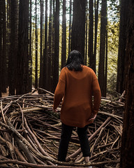 warburton redwoods (brody_d_webb) Tags: warburton redwoods nature adventure victoria melbourne forest autumn olympus explore