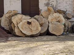 Timber log slices (Ciddi Biri) Tags: billetslices carpenter carving decoration decorative desk furniture log logfragments logslices natural organic slices table timber tree wood wooden pattern nature material textured texture architecture surface m43turkiye