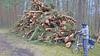 20180331_172532 (wos---art) Tags: bildschichten schneebruch sturmbruch äste bäume aufräumen haufen