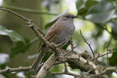 "dunnock3 • <a style=""font-size:0.8em;"" href=""http://www.flickr.com/photos/157241634@N04/27757770268/"" target=""_blank"">View on Flickr</a>"