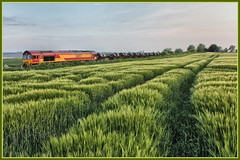 BARLEY FIELD (OLD GIT WITH A CAMERA) Tags: 66172 class66 margam hartlepool20 mill woolaston