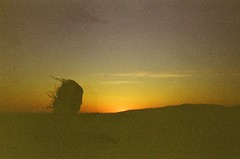 She (Caroline Kutchka Folger) Tags: woman beauty sunset la losangeles california sunsetsky 35mm film analog canoncamera 35mmfilm analogtravel roadtrip filmtravel hair silohuette grainy oldfilm femalephotographer