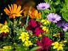 Life is colorful (Tobi_2008) Tags: blumen flowers fleurs farbe color natur nature pflanze plants