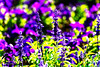 Bokeh (rossendgricasas) Tags: bokeh girona catalonia light ligthtroom flowers photo colorimage photographer photoshop nikon tamron