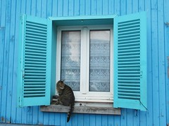 Bleu fênetre (Otherwise_m) Tags: cat chat amiens francia france somme blue bleu window photography photoshoot canon capture canonphotography