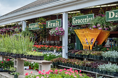 Wagon Wheel Nursery (roncohencom) Tags: garden spring lexington blossom flower gardencenter nursery massachusetts bloom farmstand ma 2018 usa