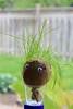 Hairy Harry (ladybugdiscovery) Tags: hairy harry hairyharry grass creature fun silly