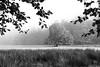 Uig Hall in mono (Caledonia84) Tags: dunoon uig hall argyll scotland tree lone landscape sony a6000 alpha fog atmosphere