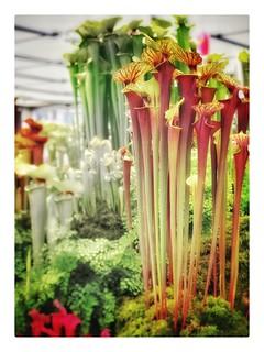 Chelsea flowershow