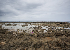 Shark Cove Reef (fantommst) Tags: lisaridings fantommst shark cove low tide oahu hawaii pupukea beach snorkeling sea ocean us usa hi rocky volcanic reef aquatic northshore
