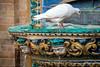 Dove enjoying fountain, Maria Luisa Park, Seville (Photos-by-Jamie) Tags: dove fountain marialuisa park seville spain whitebird