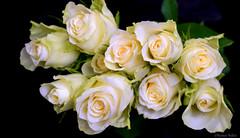 Like A Virgin (nyomee wallen) Tags: likeavirgin virginwhite pure thankyou roses