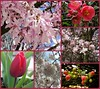 Spring 2018 in Vancouver. (France-♥) Tags: vancouver canada fleur flower collage tulipe magnolia spring printemps
