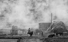 smoky village (trying to catch up again !!!) Tags: nepal nepali smoke smoky bw blackandwhite landscape outdoor outside cow village farm hay grass streetphotography streetlife ivodedecker asia countryside hill