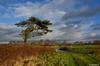 Landschaft bei Dunum (1) / Ostfriesland (berndwhv) Tags: tree landscape landschap paysage hemel sky wolken clouds weg strase landstrase country countryroad road street deutschland norddeutschland niedersachsen landkreiswittmund ostfriesland dunum süddunum regenwolken
