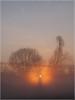 Foggy Sunrise_1004716 (uwe_cani) Tags: rur nebel fog sonnenaufgang sunrise sonne sun gegenlicht backlight baum tree bäume trees wolken clouds panasonic g9 landschaft landscape himmel sky