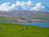 A Pleasing, Relaxing, Bucolic Landscape (Romair) Tags: pastorallandscape cows tomalesbay sanandreasfault westmarin rollinghills rogerjohnson