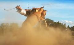 Eduardo Souza (Eduardo Amorim) Tags: gaúcho gaúchos gaucho gauchos cavalos caballos horses chevaux cavalli pferde caballo horse cheval cavallo pferd crioulo criollo crioulos criollos cavalocrioulo cavaloscrioulos caballocriollo caballoscriollos pampa campanha fronteira bagé riograndedosul brésil brasil sudamérica südamerika suramérica américadosul southamerica amériquedusud americameridionale américadelsur americadelsud cavalo 馬 حصان 马 лошадь ঘোড়া 말 סוס ม้า häst hest hevonen άλογο brazil eduardoamorim gineteada jineteada