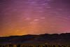 _DSC8207 (andrewlorenzlong) Tags: joshua tree national park joshuatree joshuatreepark joshuatreenationalpark california desert cholla chollas cactus garden chollacactusgarden