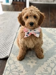 Derby showing off her new bow