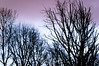 Ombres. (Canad Adry) Tags: carl zeiss contax cy planar t 50mm f14 color purple sky ciel ombre shadow tree arbre crepuscule sunset sony alpha a6000 vintage old classic manual lens