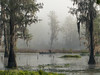 2018-04-11 07.10.16 P1000696 A foggy morning with my peeps (Tara Tanaka Digiscoped Photography) Tags: bird nesting swamp cypress digiscoping florida rookery fog mist water pond tree