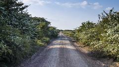 The Old Road Through the Thorns (stevedewey2000) Tags: wiltshire salisburyplain treescape trees hawthorn mayblossom mayflower road oldroad byway 169 sigma sd quattro sigma30mm14artlens
