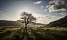 Tree (alphapiglet_) Tags: sony alpha a6000 sunstar tree big fish hillside lake sunrise contrast nature