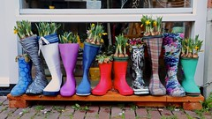Rain Boots used as Pots (YY) Tags: lisse netherlands southholland town rainboots pots plants flowers narcissus daffodil