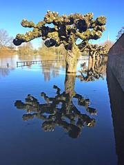 Worcester the Flood,s 2018 2 (Duckwailk 2017) Tags: floods 2018 worcester riversevern