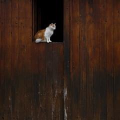 Le point de vue idéal (Et si, et si ...) Tags: chat porte bois profil portrait