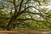 Oak Alley Plantation Grounds (dtredinnick13) Tags: louisiana louisianaplantationss oakviewplantation tree oak landscapephotography landscape moss green nikon nikond850 nikon2470