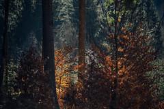 Im dunklen dunklen Wald (Gruenewiese86) Tags: harz ostern wald wälder wandern waldlandschaft waldlandschaften waldboden wanderung canon 6d deutschland baum felsen tier gras himmel landschaft