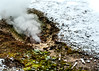 Yellowstone NP Trip - Day 4 (3) (tommaync) Tags: yellowstone yellowstonenationalpark yellowstonenp park national february 2018 wyoming nikon d7500 fumarole steam bacteria snow nature westthumb thermal