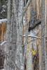 between the lines (sami kuosmanen) Tags: ice metsä man mies maisema mountain luonto light landscape kiipeily jää sky suomi snow art spring sport winter yellow climbing colorful creative tree talvi jääkiipeily keltainen hakku kypärä axe helmet