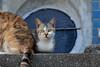 cats (428sr) Tags: nikon neko ねこ 猫