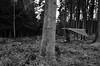 Morning walk (simonclaeye) Tags: blackandwhite dark bw nature tree trees nikon nikond nikond7000 morning belgium ardennen
