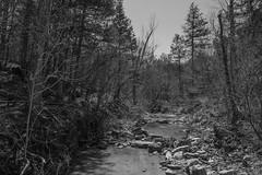 Hercules Glades Wilderness - Pees Hollow Trail (Gary Allman) Tags: brushycreek blackandwhite backpacking ozarkswalkabout gsa april2018 herculesgladewilderness peeshollowtrail bradleyville missouri unitedstates us