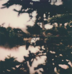 """The Littlest Snowflake (dreamscapesxx) Tags: instant polaroid theimpossibleproject instantlab """"polaroidoriginals600film"""" snow snowflake snowfall pine intheyard barrytonmi polavoid snapitseeit"""