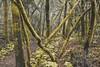 Regenwald (Joheina Hamami) Tags: joheina hamami frankfurt germany nikon 5500 best camera prime lens 35mm 50mm 14 sigma art 18 1770mm world street photography strasenfotografie city snap porträt portrait flickr