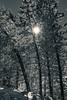 Sun through Tree (Bugtris) Tags: gurnigel 2470f4l tanne gantrisch landschaft schnee canon 5dmkiii alpen winter