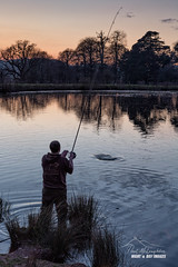 He caught the fish, I caught the picture! (macdad1948) Tags: pond water birds shobrooke angler crediton sunset devon shobrookepark fishing