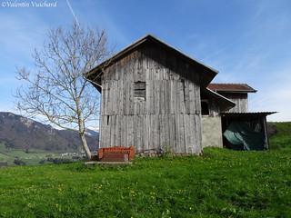 SF_DSC03124 - Switzerland, Gruyère region - Old barn.