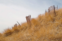 IMPG-0361-Dune-Fence (alankerd) Tags: muskegon mi usa dune dunegrass fence snowfence grass hill michigan