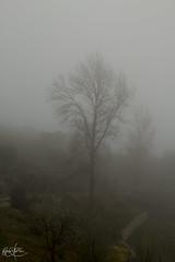 Sí, arriésgate... Esa es siempre la respuesta (Carmen D.R) Tags: güejar granada naturaleza nature niebla canon 60d